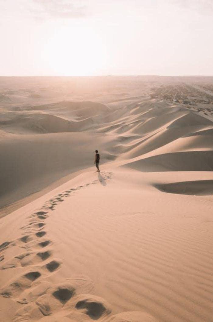 Desert Safari Image